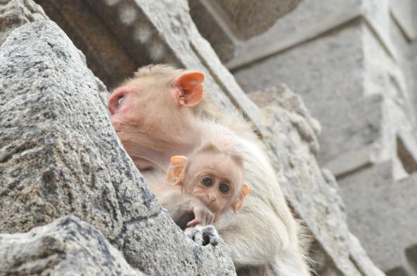 +Baby Monkey